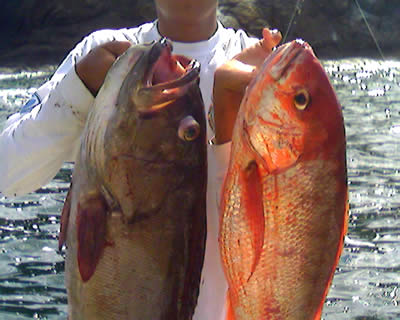 Flamingo beach inshore fishing charters