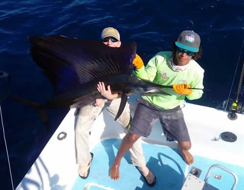Papagayo sailfishing