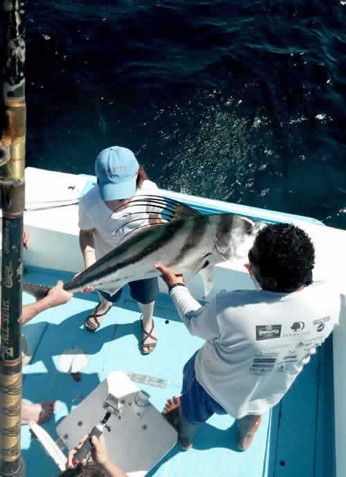 Dreams Las Mareas inshore fishing for roosterfish