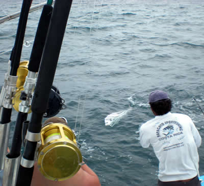 Roosterfishing charters out of Grand Papagayo